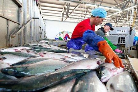 Робота для різноробочого на рибний завод в Швецію
