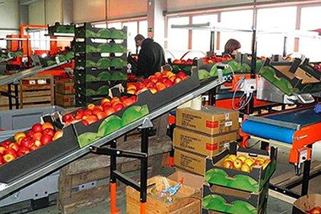 Работа упаковка овощей