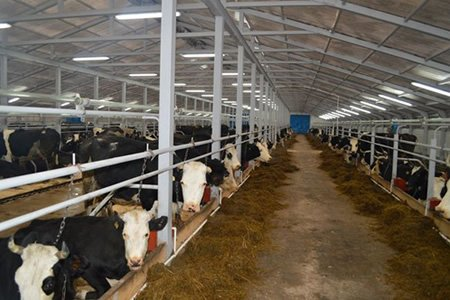 Вакансия молочник на ферму