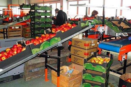 упаковка овощей Нидерланды
