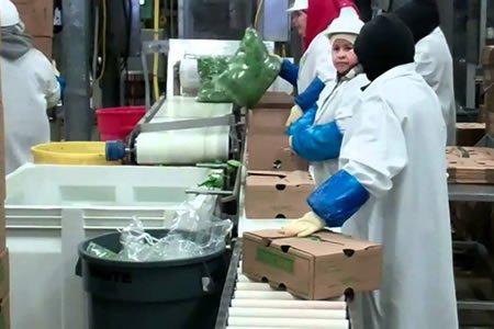 Упаковщик замороженных овощей и фруктов в Польше