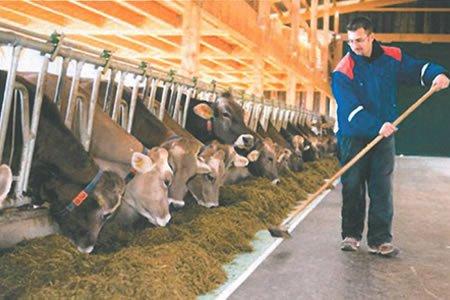 Работа для работника на молчную ферму в Венгрии