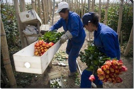 Работа для работника теплицы в Португалии
