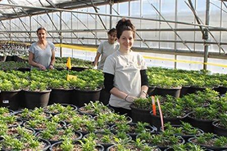Работа для студентов на ферму в Дании
