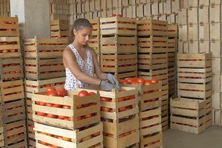 Работа для студентов на фасовку овощей в Финляндию