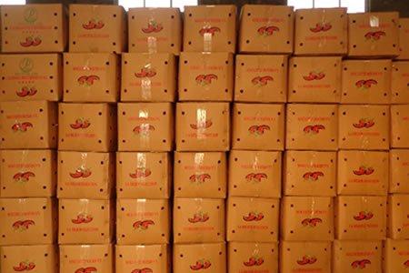 Работа для студентов на упаковку помидоров в Испании