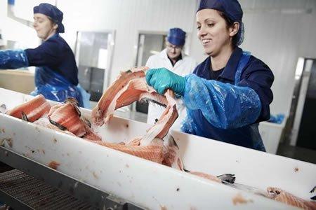 Работа для обработчика рыбы на производстве в Эстонии