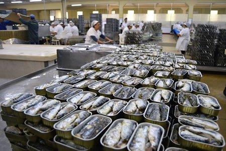 Работа по изготовлению консервов из рыбы на производстве
