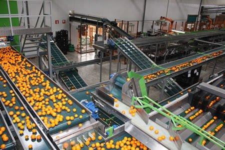 Работа для сортировщика фруктов на заводе