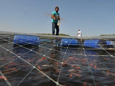 Работа на рыбоводческом хозяйстве по розведению рыб
