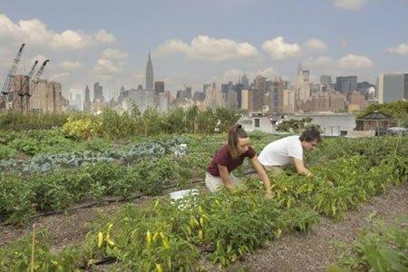 Работа в сельком хозяйстве, посадка сбор овощей