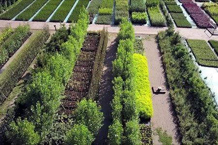 Работа для рассадника деревьев и кущей в питомнике