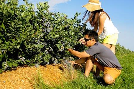Работа для студентов на ягодниках
