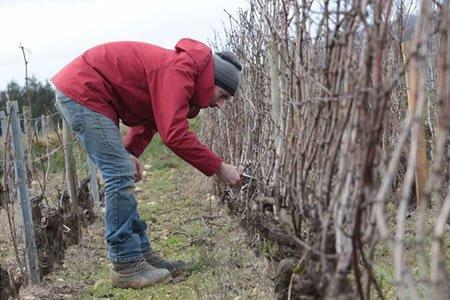 Работа для студентов на винограднике