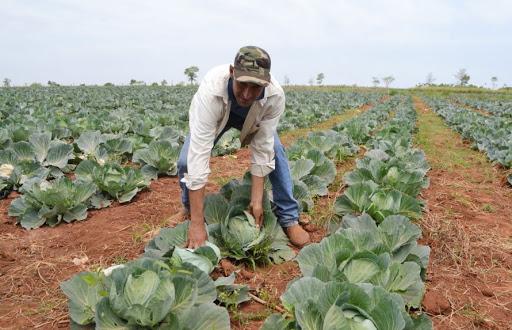 Работа для студентов на ферме по выращиванию капусты