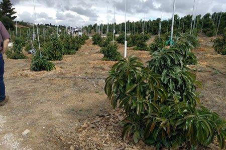 Работа по посадке фруктового сада