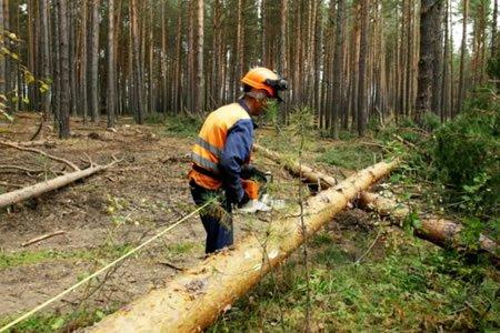 Работа для лесоруба валка и распил леса