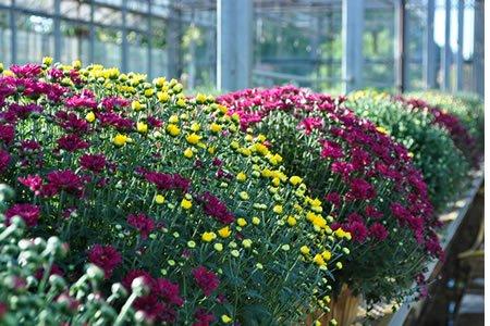 Работа для студентов по выращиванию декоративных растений