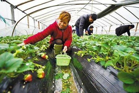 Стажировка для студентов на сбор урожая в теплице и туннелях