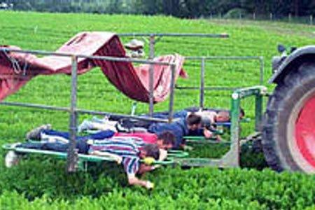 Стажировка для студентов на ферме по выращиванию овощей