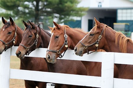 Работа для студентов на конной ферме