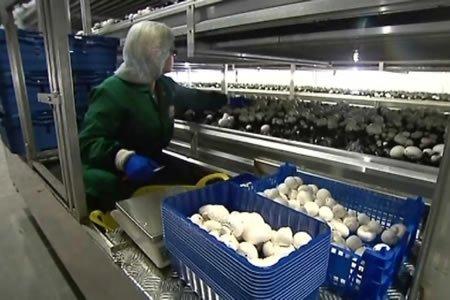 Работа для студентов на сбор грибов