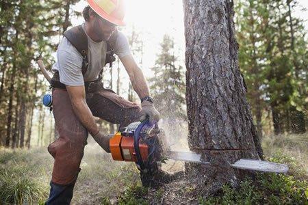 Работа для вальщика леса