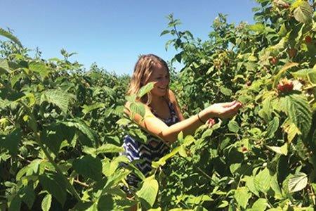 Работа для студентов по сбору овощей и фруков