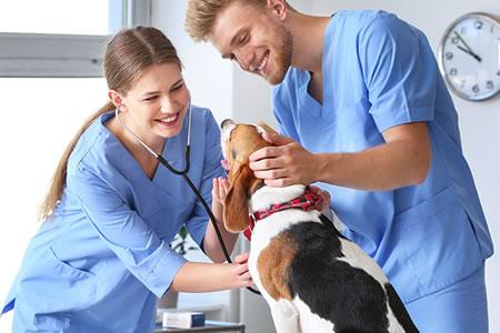 Работа для помощника ветеринарного врача в клинике