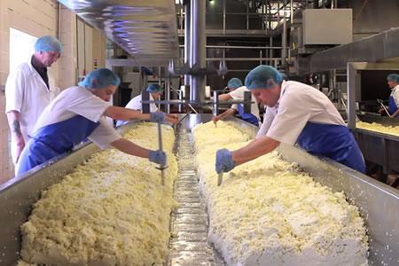 Работа для сыровара на производстве