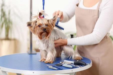 Работа грумером для домашних животных