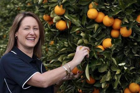Работа по сбору апельсин
