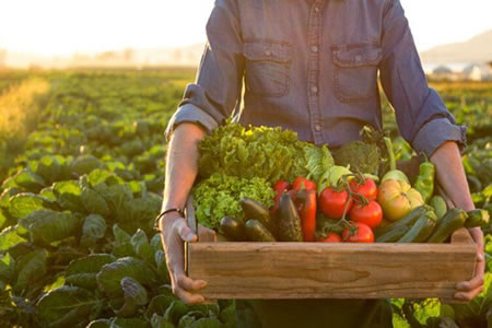 Работа для студентов по сбору овощей на поле