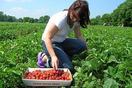 Работа для студентов в сельском хозяйстве на сбор ягод