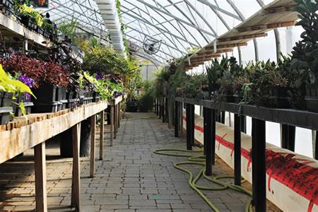 Работа для женщин озеленителем в оранжереи