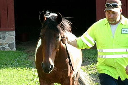 Работа на конной ферме