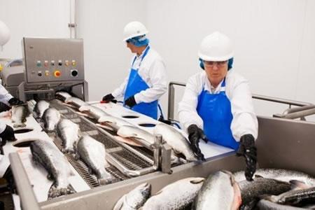 Работа для оператора линии по переработке рыбы