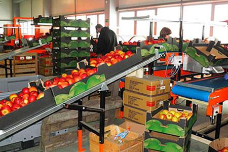 Работа для упаковщика овощей и фруктов на складе